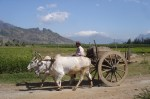 Bullock_cart_in_Tamil_Nadu